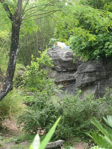 Pangani Forest Exploration Trail camp site