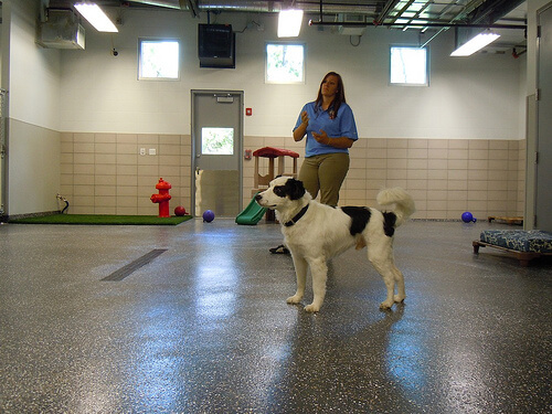 Best Friends Dog Daycare Disney