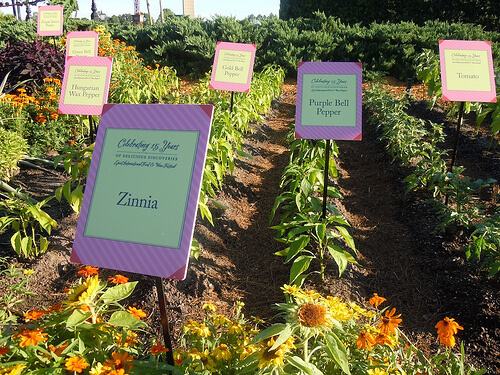 Epcot International Food and Wine Festival herb garden