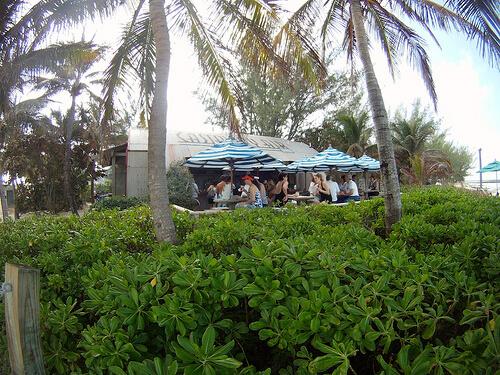 Bar - Castaway Cay