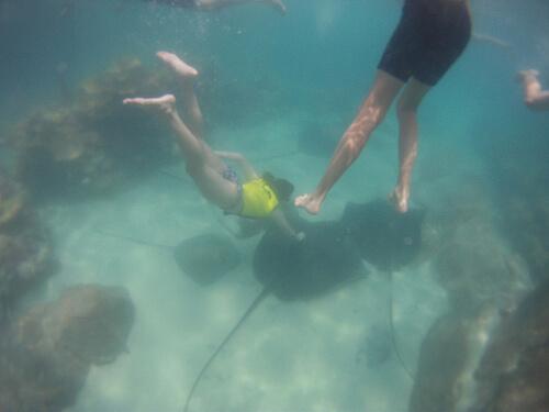 Grand Reef at Discovery Cove, SeaWorld Orlando