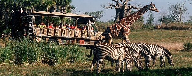 Walt Disney World to replace Audio-Animatronics with live animals in Kilimanjaro Safaris at Disney's Animal Kingdom