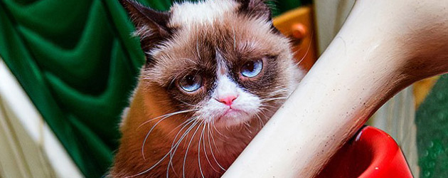 Grumpy Cat makes Disneyland the Grumpiest Place on Earth, showing her 'Disney Side' with other social media stars