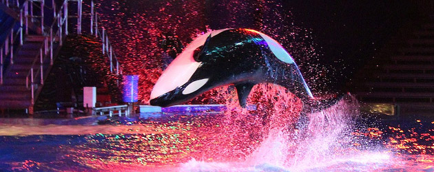 SeaWorld Orlando celebrates the 2013 Christmas season with park-wide lights filling nights with holiday presents aplenty