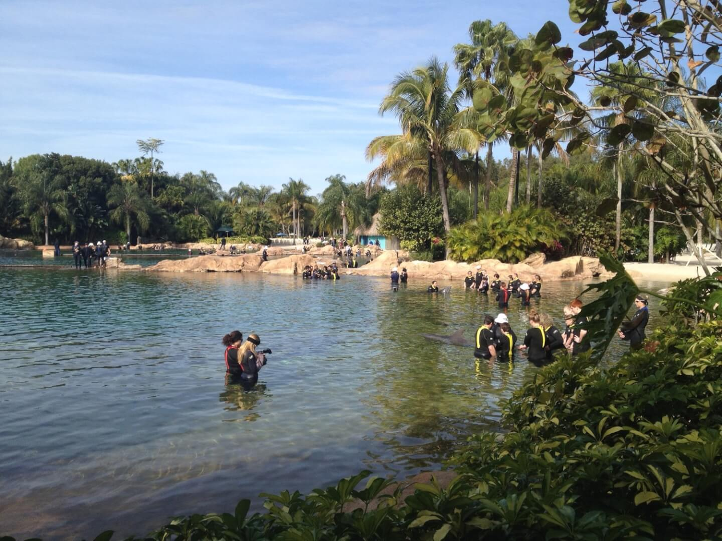 Discovery Cove remains SeaWorld Orlando's best bet for ...