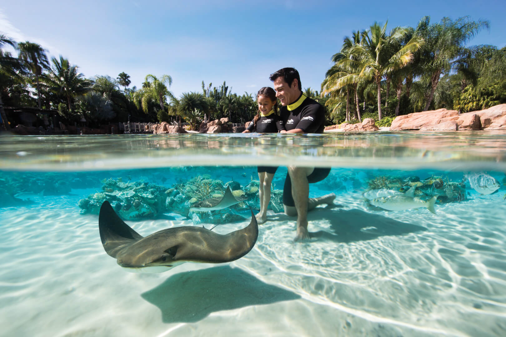 Seaworld Orlando Tickets And Hotel Packages