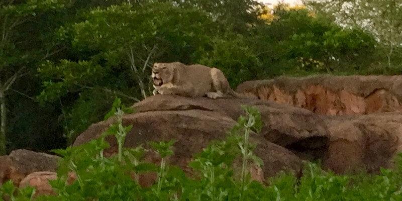 Safari Disney's Animal Kingdom