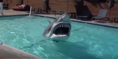 shark suit 2