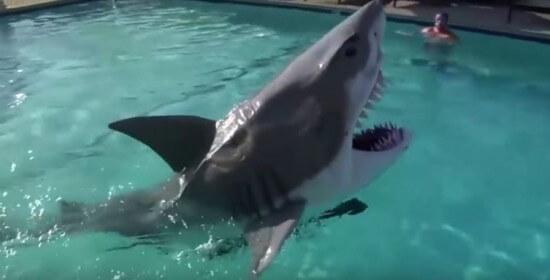 shark suit 3