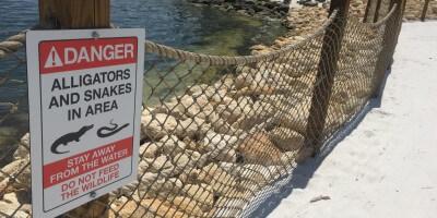 Anti-Gator Fences