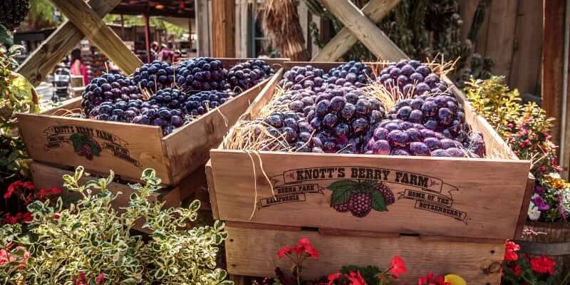 Boysenberry in Ghost Town