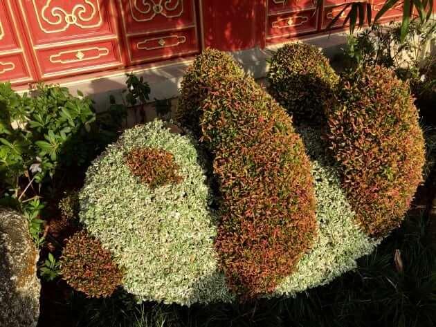 Pandas (China)