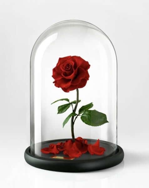 Disney Bella Rose