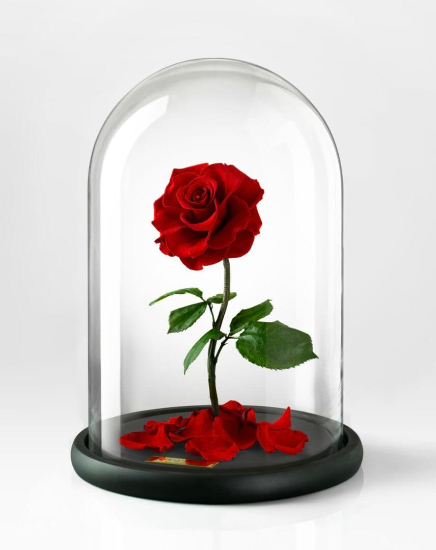 real life bella rose from forever rose london the. Black Bedroom Furniture Sets. Home Design Ideas