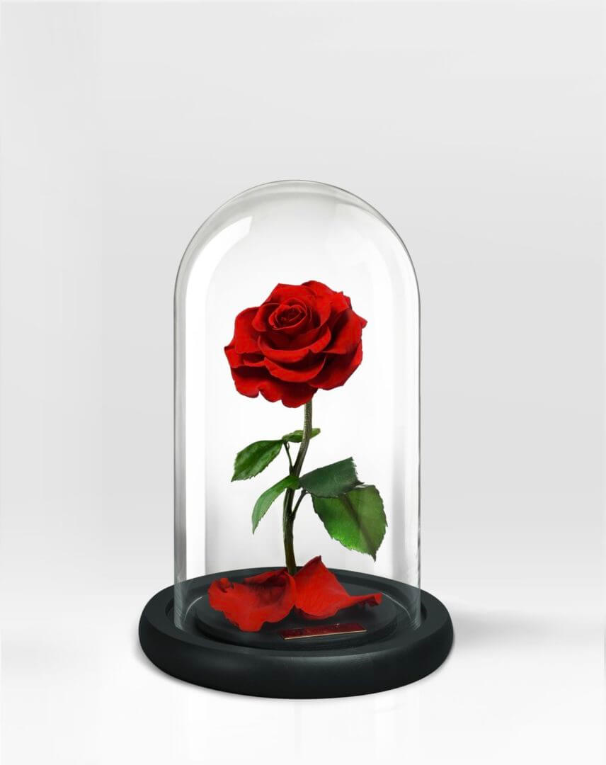 Disney Beauty And The Beast Glass Rose