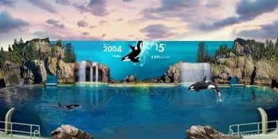 SWSD 2017 Orca Encounter