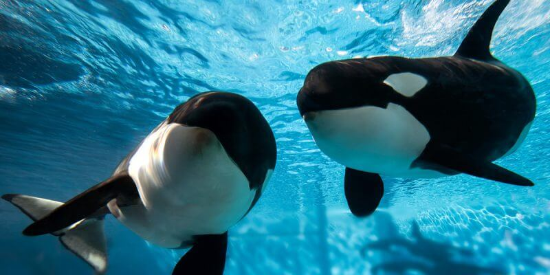 SeaWorld cuts 350 jobs, mostly in Orlando and San Diego