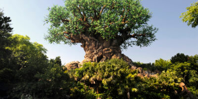 Teen inappropriately grabbed at Disney's Animal Kingdom, Sheriff's report says