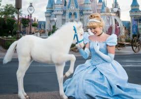 "Meet Lilly, the newest ""Cinderella Pony"" at Magic Kingdom"