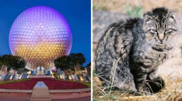 Disney World rabies alert
