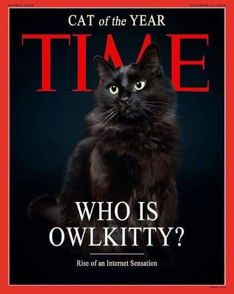 Owl Kitty TIME magazine