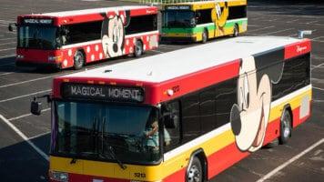 Disney Busses