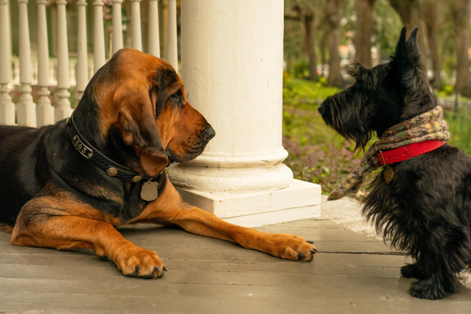 Dog Training Secrets From Lady And The Tramp Use These To Train Your Dog Too Inside The Magic
