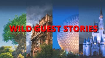 wild disney world guest stories