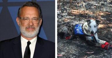 Tom Hanks/Bear the Koala Detection Dog
