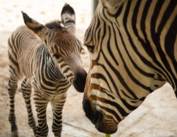Baby animals Animal Kingdom