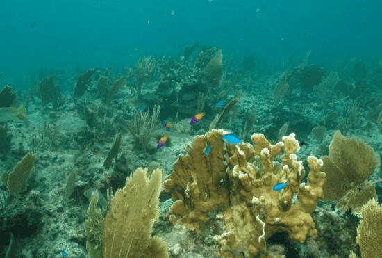 Coral Reef Disney