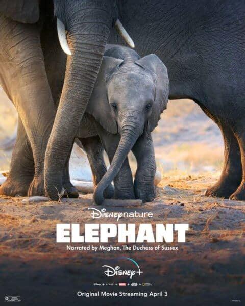 DisneyNature Elephant Movie Poster