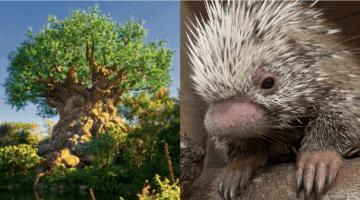 shelley the porcupine header
