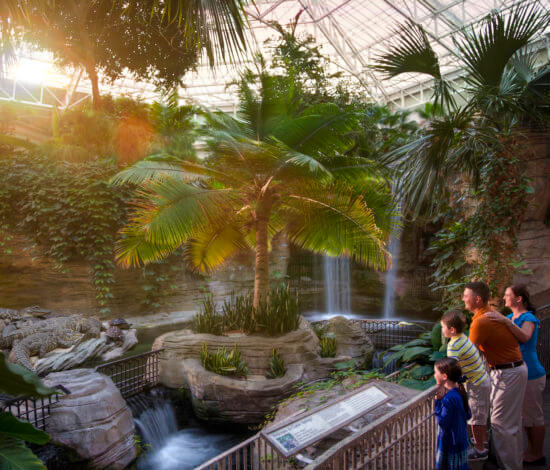 gaylord palms family friendly exhibits