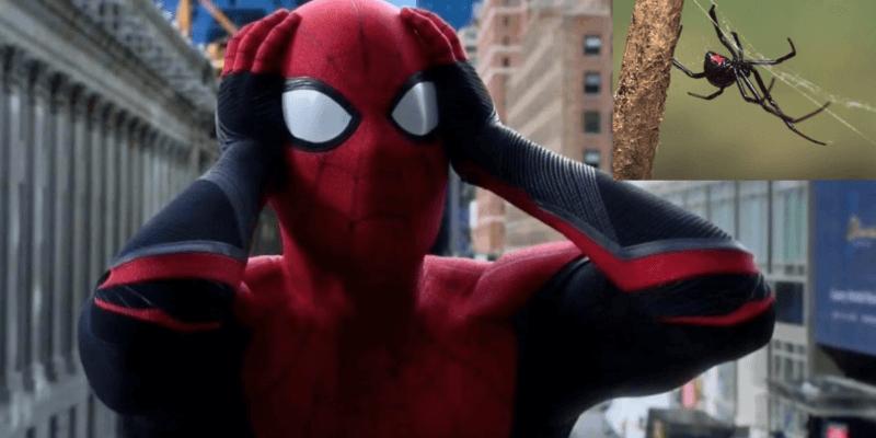 Spider-Man fans spider bite
