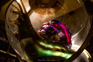 Universal Studios Florida Photos glowing slug