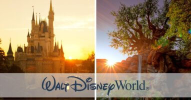 Cinderella Castle and Tree of Life