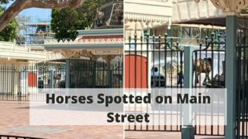 Disneyland Horses Spotted on Main Street
