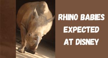 rhino babies expected at Disney header