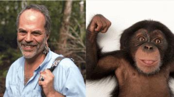 rohde chimp