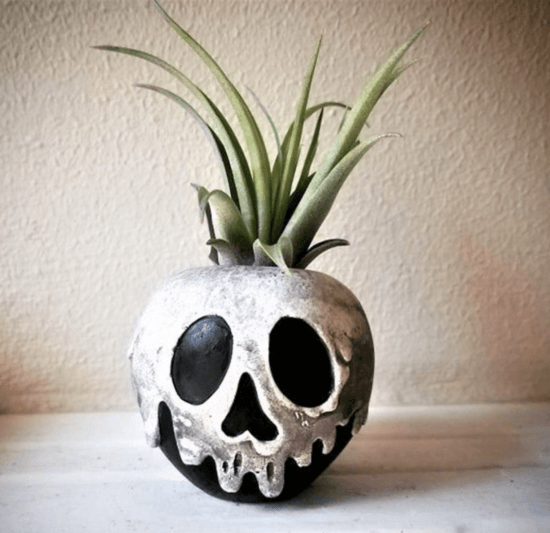 poison apple succulent