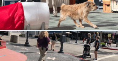 dog escape universal orlando