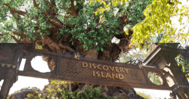 Discovery Island feature photo