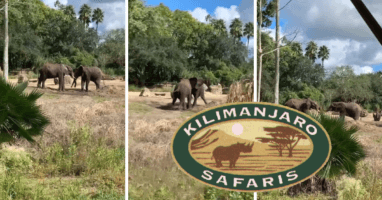 kilimanjaro safaris elephants