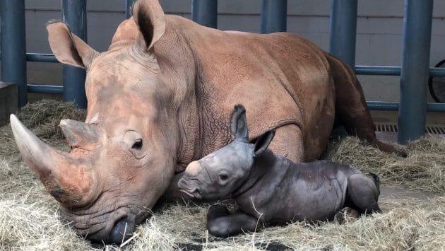 Baby Rhino at Animal Kingdom