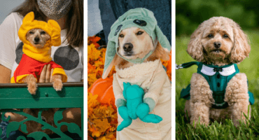 dogs in disney costumes