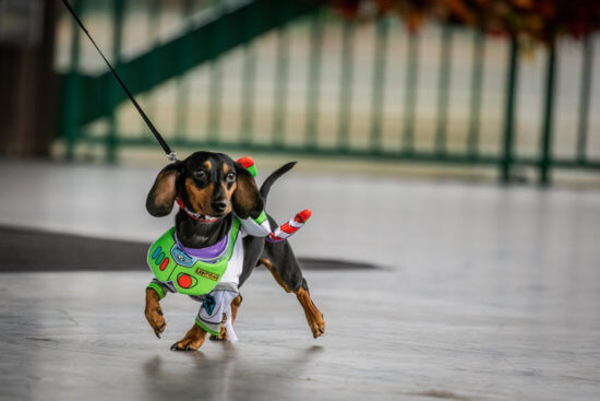 buzz lightyear disney dog costume
