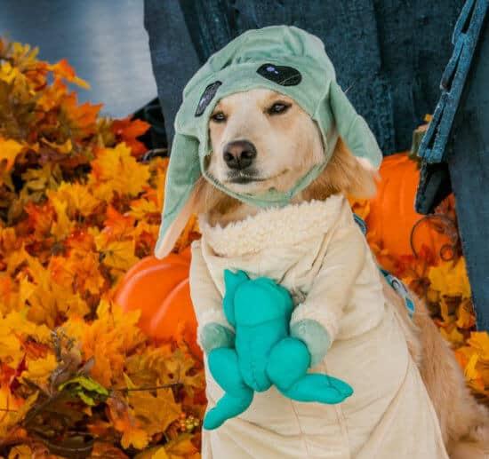 dogs in disney costumes baby yoda