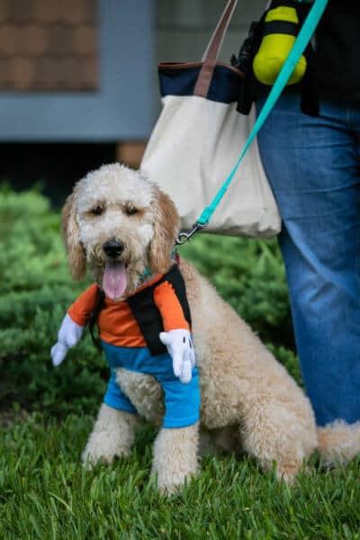 dogs in disney costumes goofy