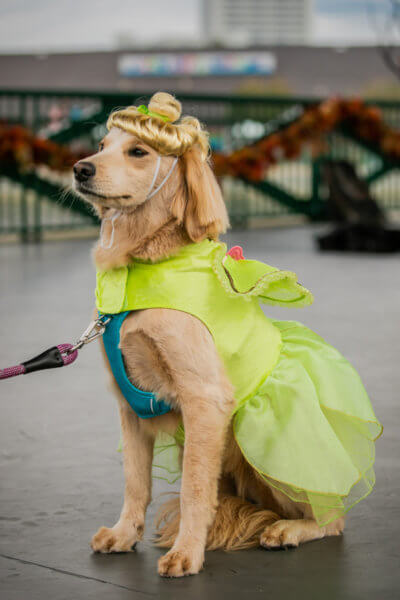 dog dressed as tinker bell